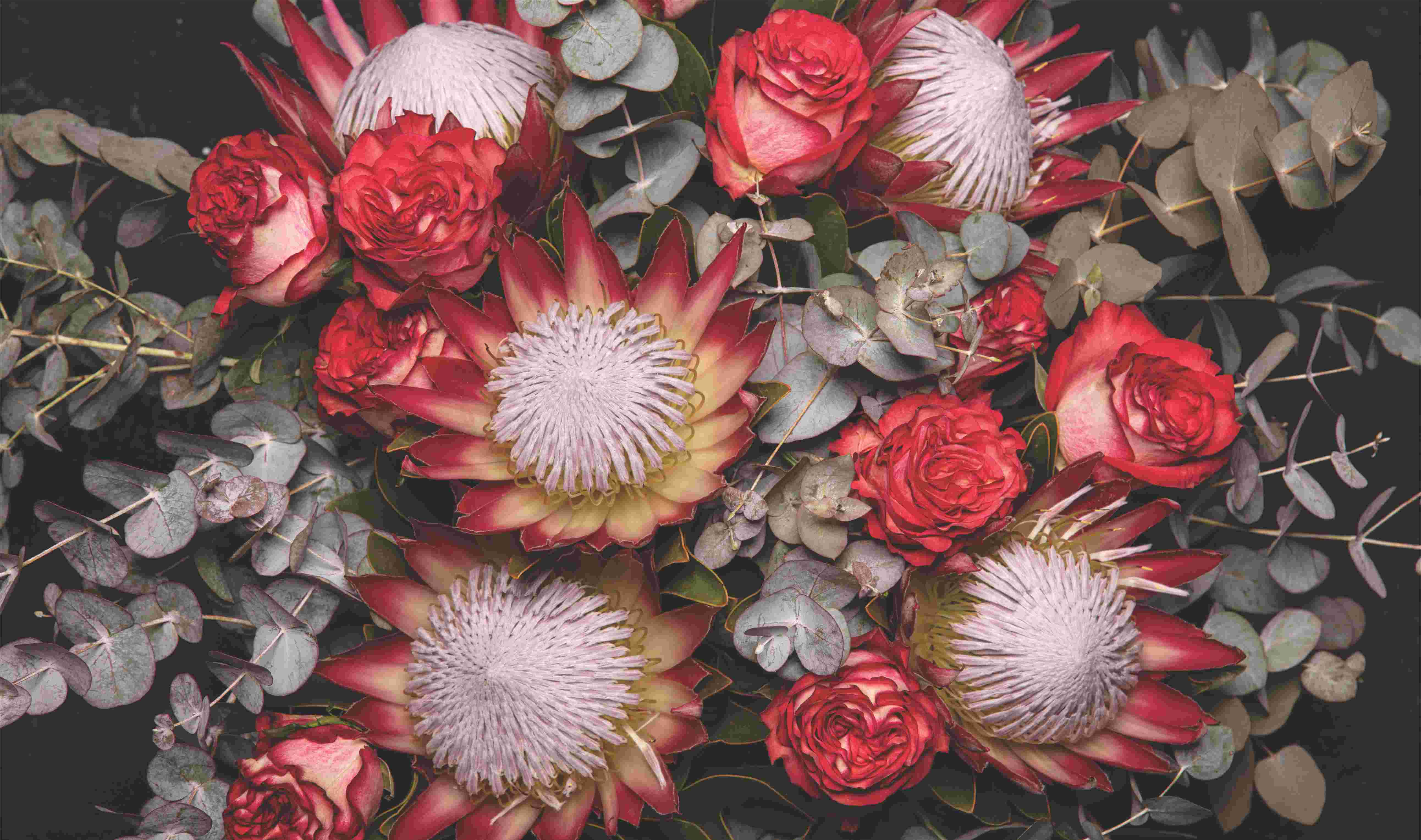 Red Proteas and Roses close up table cloth